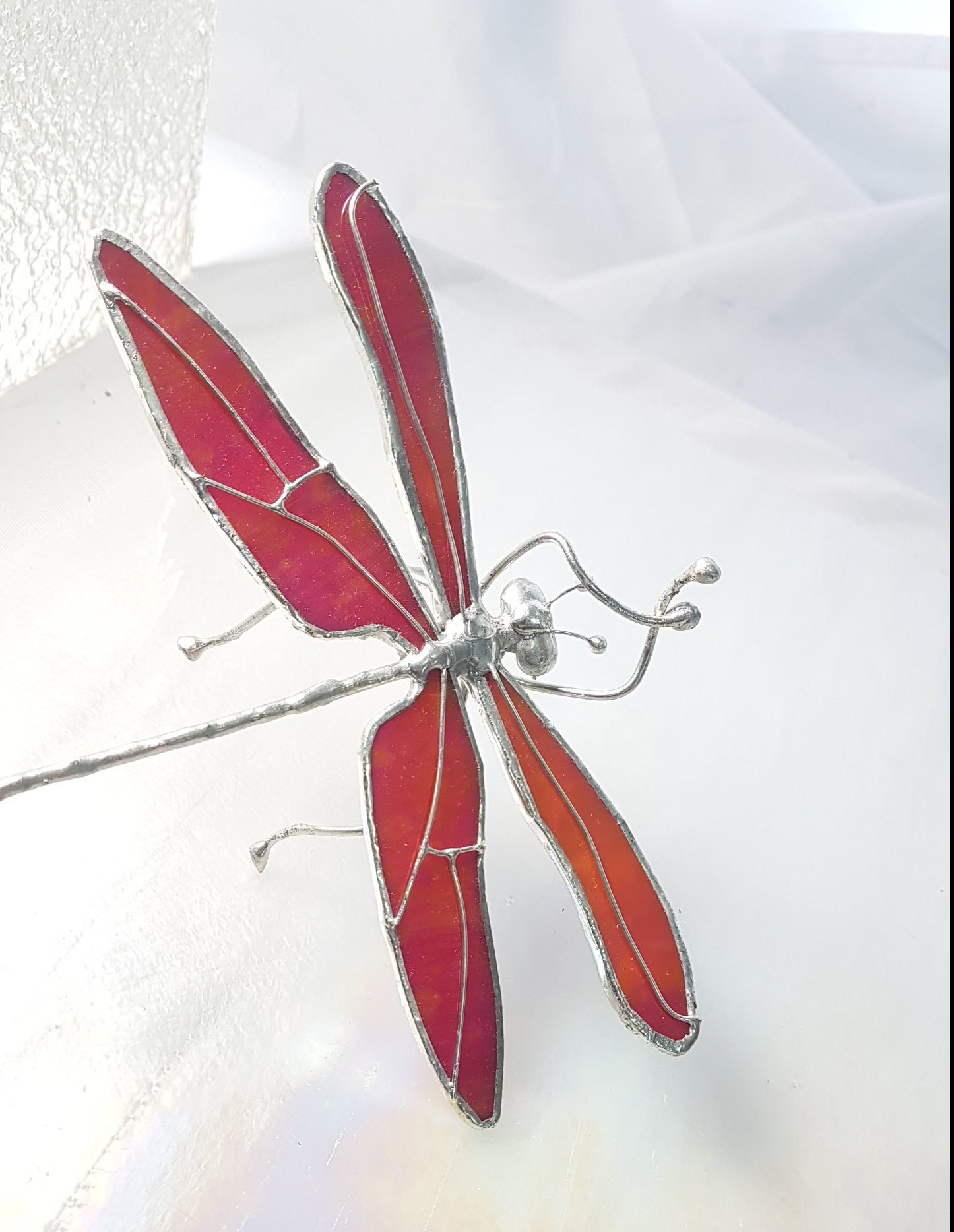 Y46d Real Iridescent Wing Dragonfly Odonates sp Spread 3\u201d Glass Dome specimen Insect Curiosity Oddity Display Collectible Educational